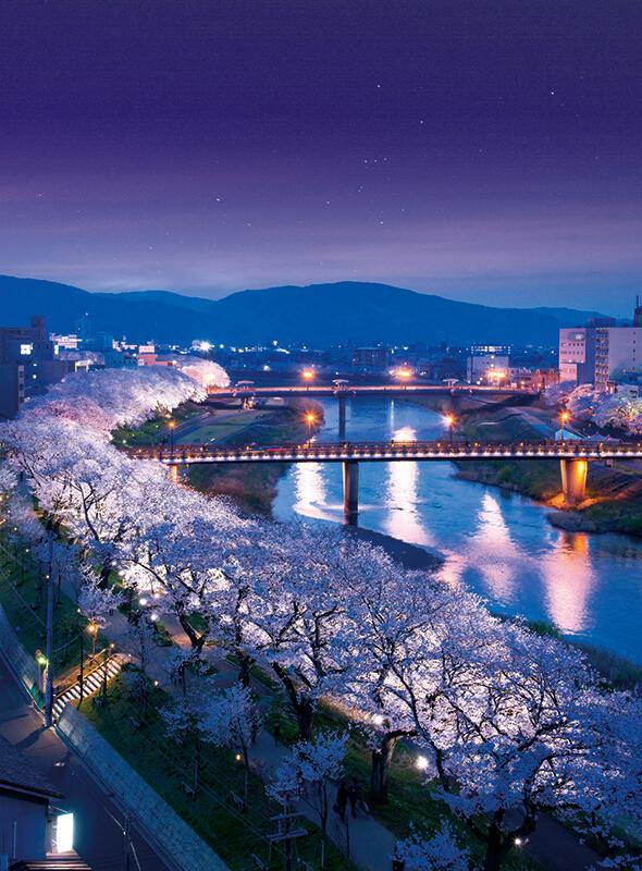 Asuwa Rivre Cherry Blossoms