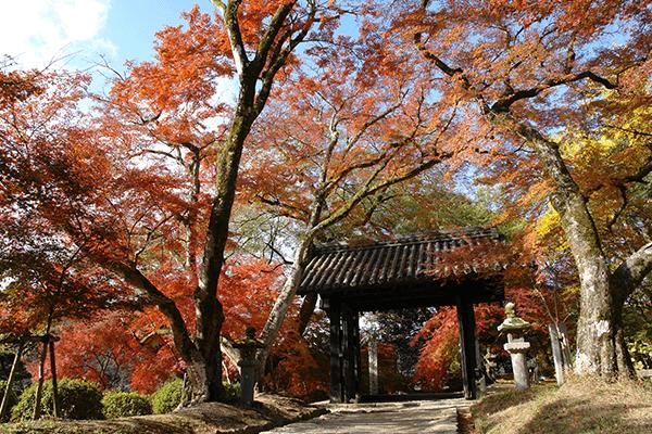 The city-castle-dAkizuki