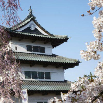 Hirosaki castle cherry blossoms