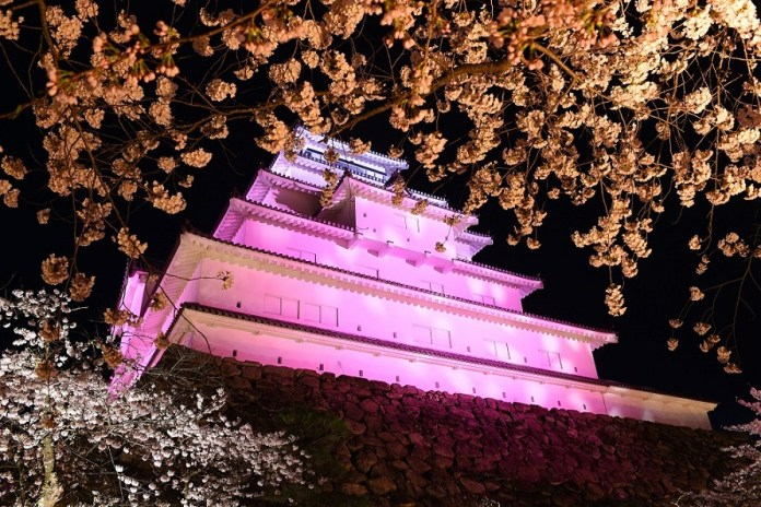 Tsuruga-jo Castle cherry blossoms nighttime