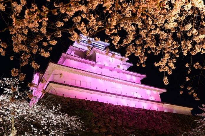 Tsuruga-jo Castle cherry blossoms nighttime