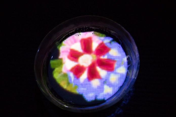 teamLab Borderless flower teacup