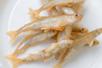 Fried Wakasagi