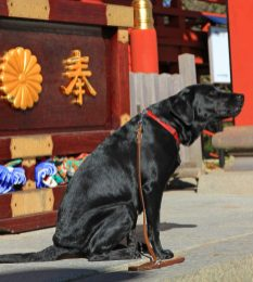 dog at Musashi Mitake Shrine
