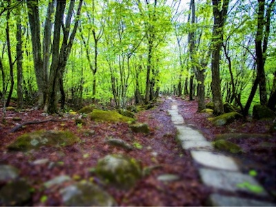 Mineyama Kogen Highlands