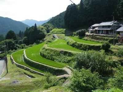 Okuizasa rice terraces