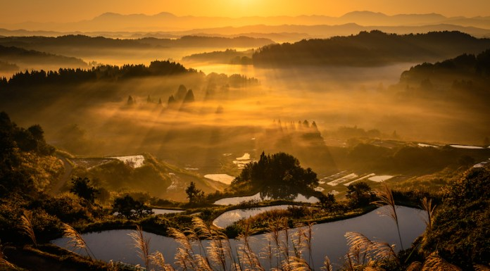The terraced rice fields of Hoshitoge in Autumn   ©Niigata Prefectural Tourist Association