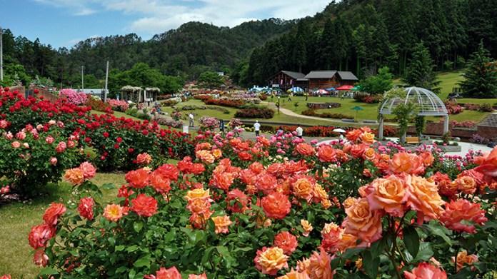 Yamagata, Murayama City Rose Festival ticket