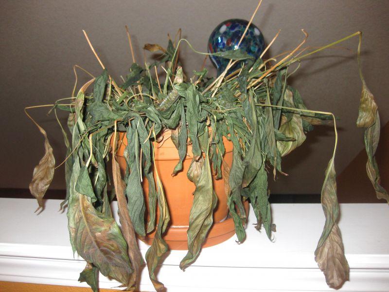 Image result for dead plants