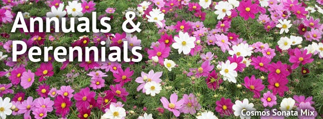 Difference between an annual and perennial whats the difference annuals and perennials mightylinksfo