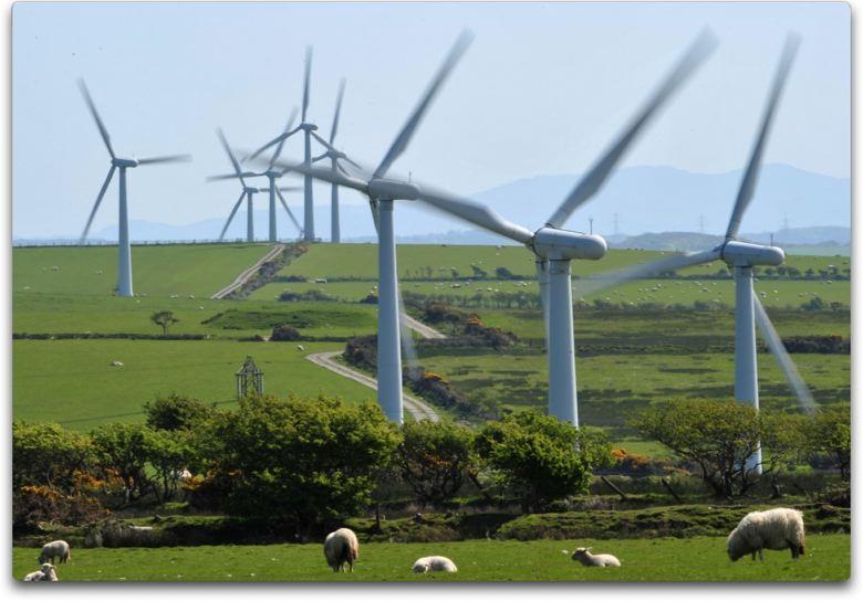 Study Wind Farms Kill Off 75 Of Buzzards Hawks And Kites