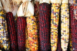 Claim: Climate Change will Cause a Global Corn Crop Failure