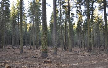 Study: cut down trees in California to save billions of