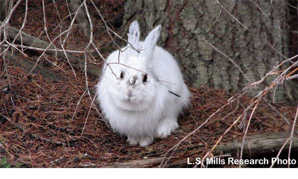 white_rabbit_on_brown