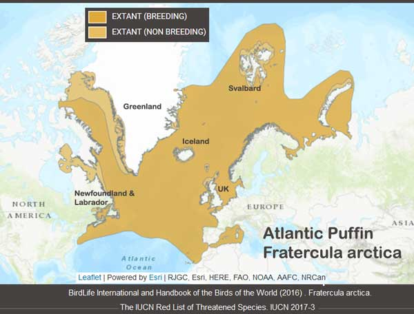 The Problem with Puffins   Watts Up With That?