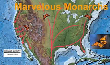 The Marvelous and Mysterious Monarch | Watts Up With That?
