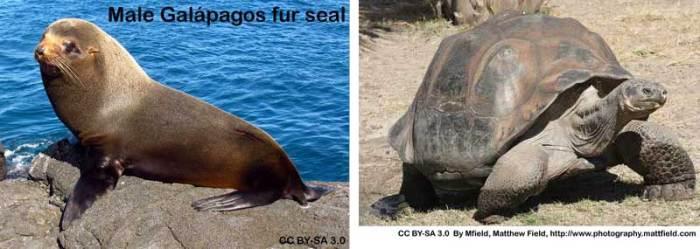 seal_tortoise