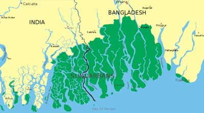 SUNDARBANS_CLOSE_UP
