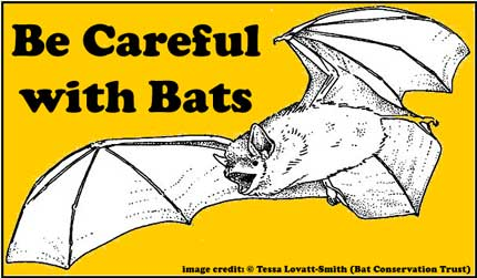 featured_image_bats