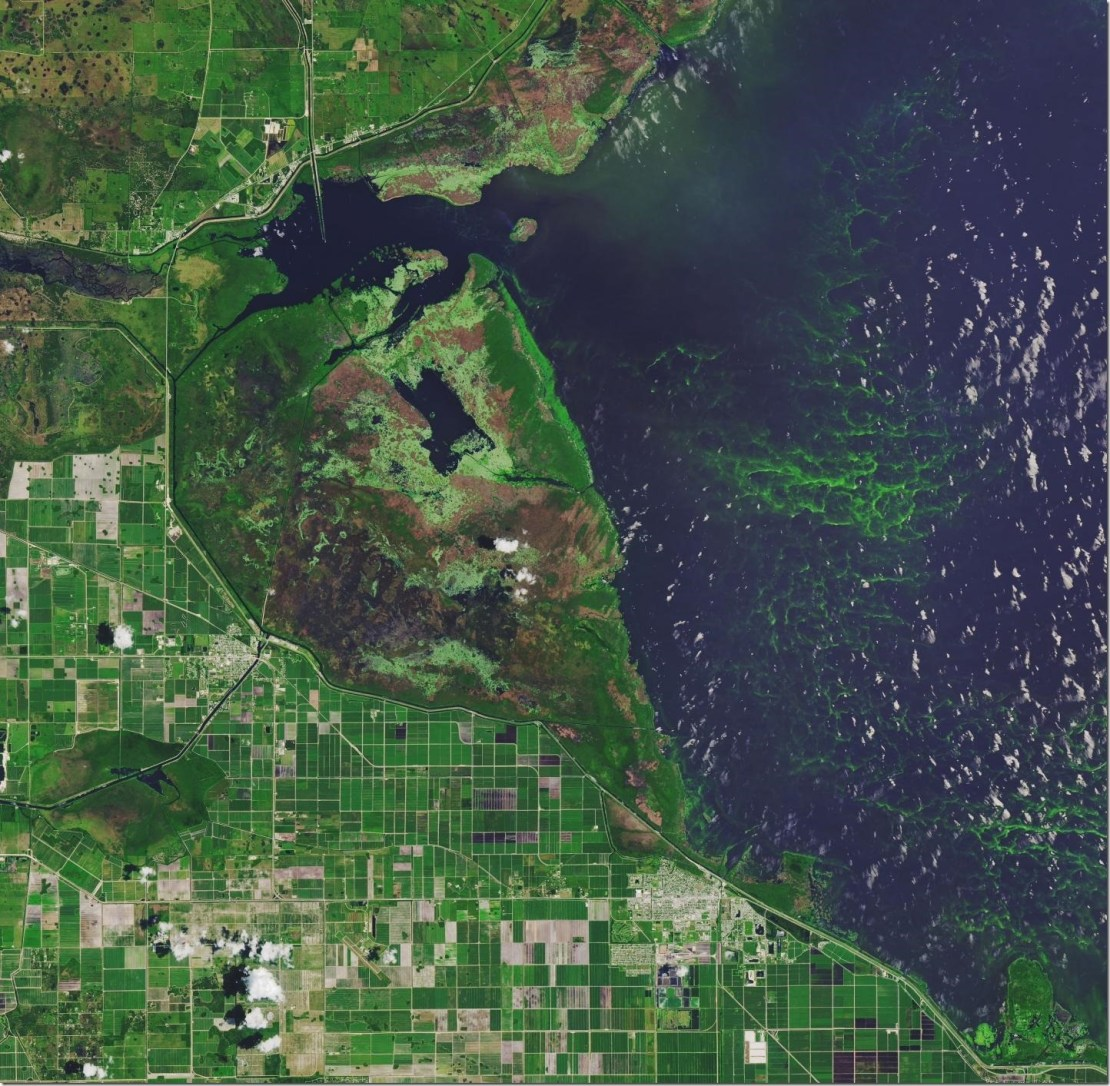 Ho, Michalak, and Pahlevan's study of algal blooms in lakes over a 30-year period found that Florida's Lake Okeechobee deteriorated. Toxic algal blooms resulted in states of emergency being declared in Florida in 2016 and 2018. Credit NASA Earth Observatory image made by Joshua Stevens, using Landsat data from the U.S. Geological Survey.
