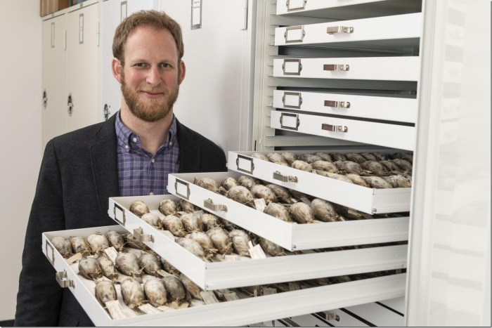 University of Michigan evolutionary biologist Benjamin Winger with some of the migratory songbirds used in a large study of avian responses to climate warming.  Credit: Roger Hart/University of Michigan Photography.