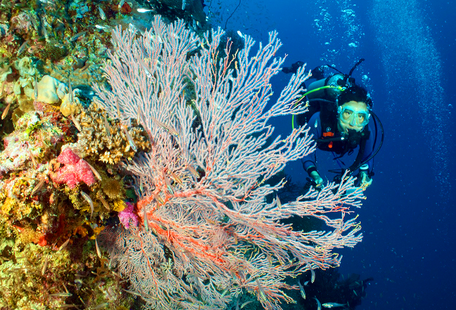 """Proxies"" Claim Half the GBR Corals Dead – But Not in Real Life"
