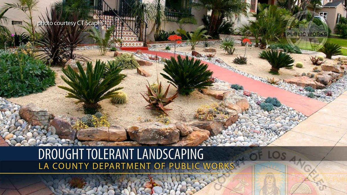 california drought tolerant landscaping