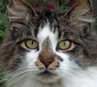 cat-1827955_640