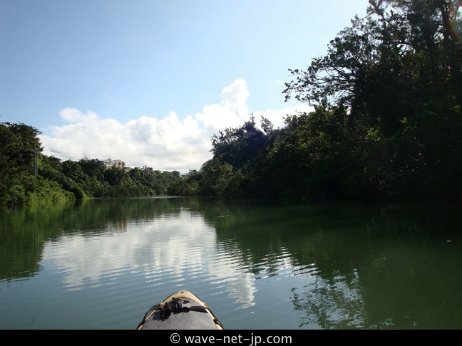 Mangrove kayak picture 1