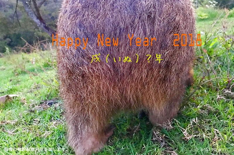 あけましておめでとうございます!2018はウォンバットのお尻がキーワード?