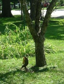 squirrel-bungee-cord-feeder-1664
