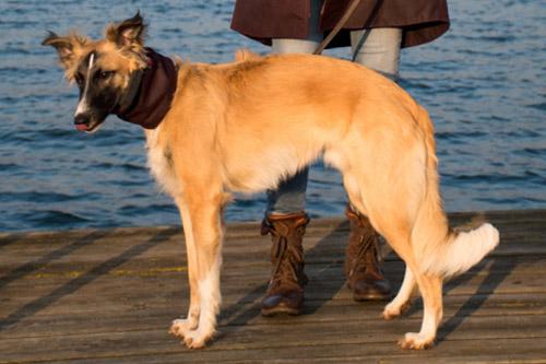 Hundeloop passend zu Frauchens Mantel