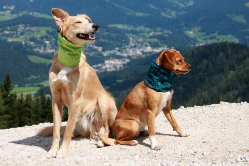 Hundeloops aus Softshell