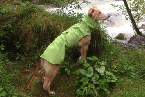 Softshell Regenmantel für Hunde