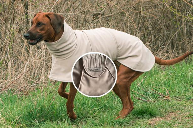 Ridgeback Baghira liebt den Hundemantel von Waxwerke