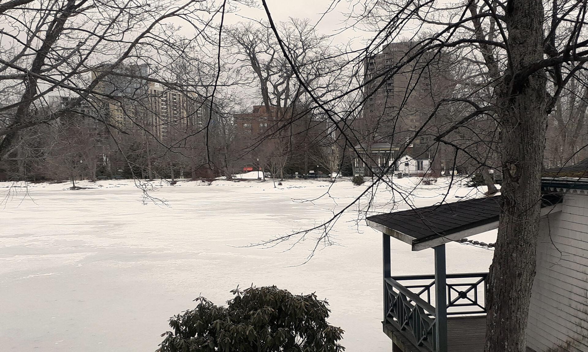 Public Gardens in winter