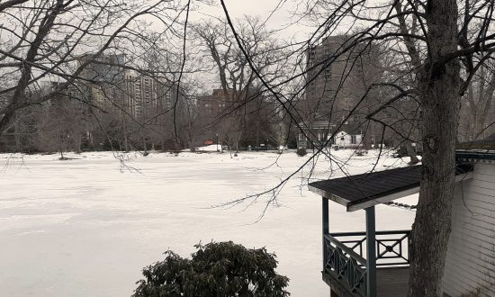 Public Gardens in winter