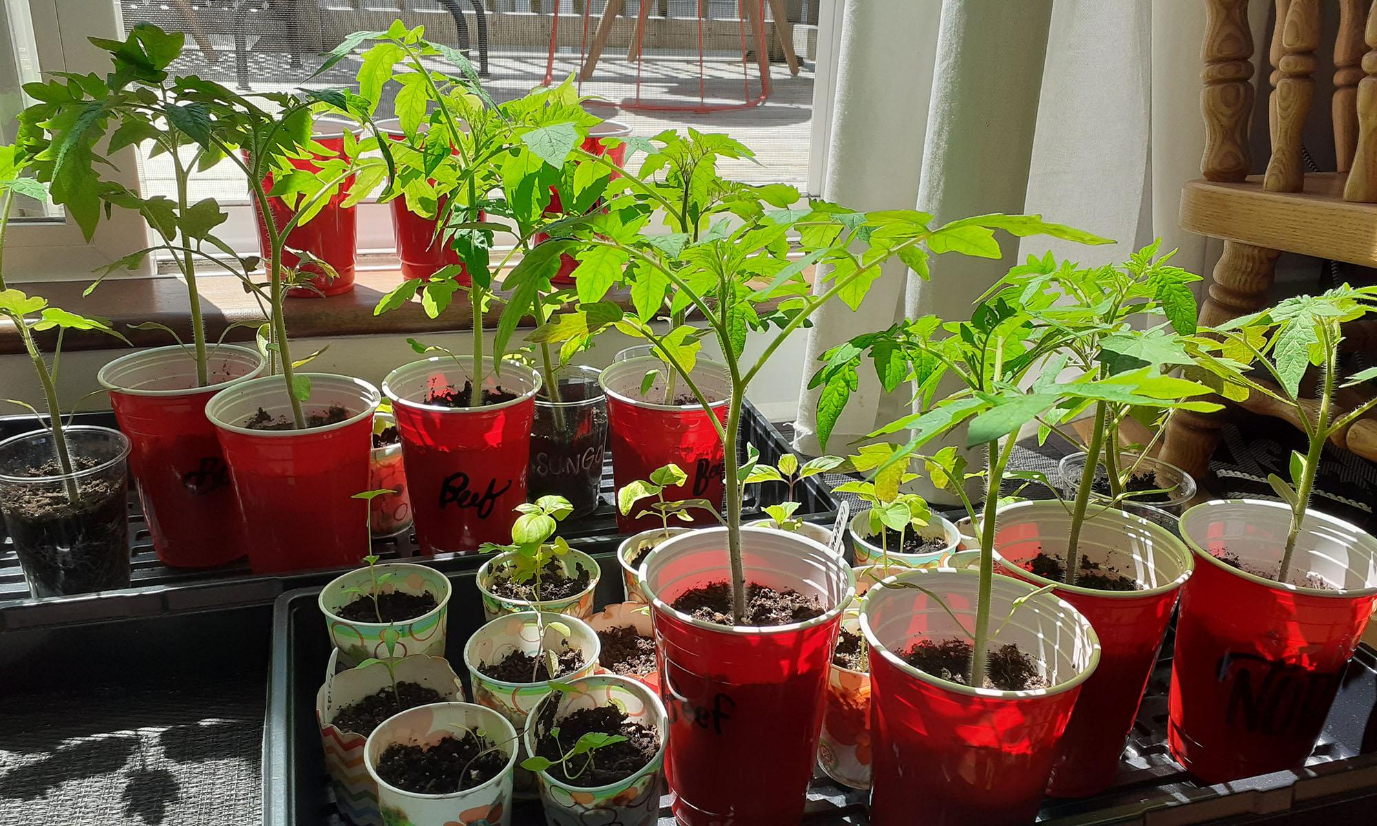 plantstarts2000