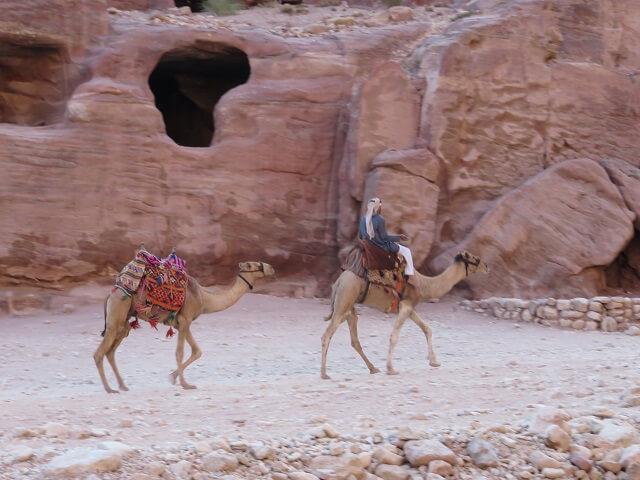 ヨルダン・ペトラ遺跡のラクダ