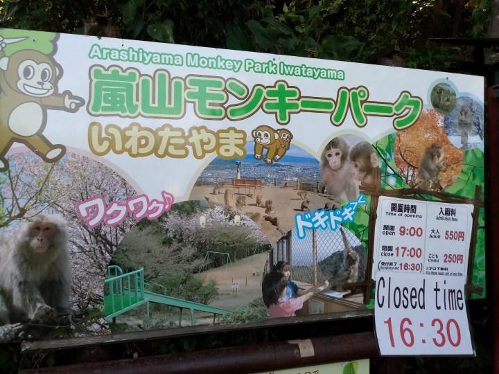 Iwatayama Monkey Park 嵐山モンキーパーク