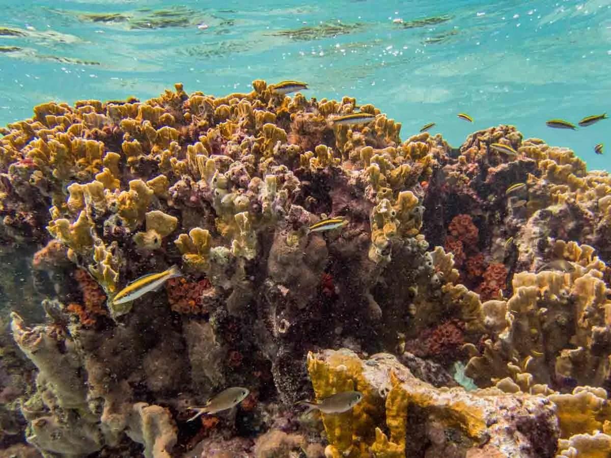 Bonaire Snorkeling Reef