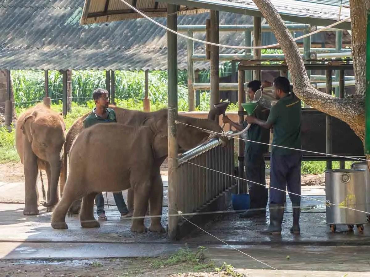 Elephant transit center Sri Lanka wildlife rehabilitation