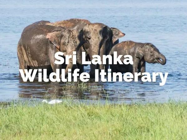 Travel to Sri Lanka- Wildlife Itinerary