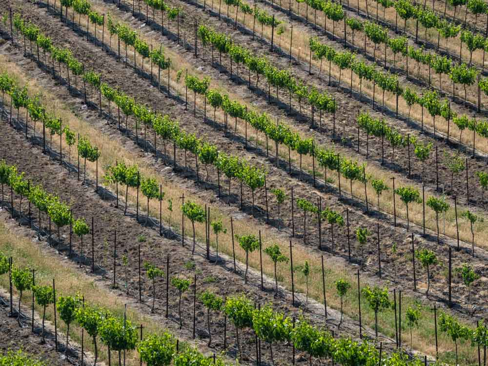 Ebberly Vineyard in Paso Robles