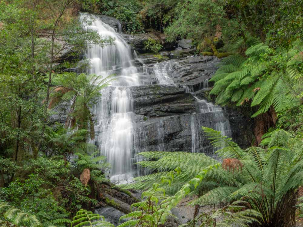 Triplet Falls Cape Otway Australia. Waterfall with green ferns
