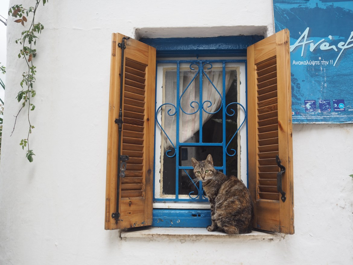 Strays of Greece