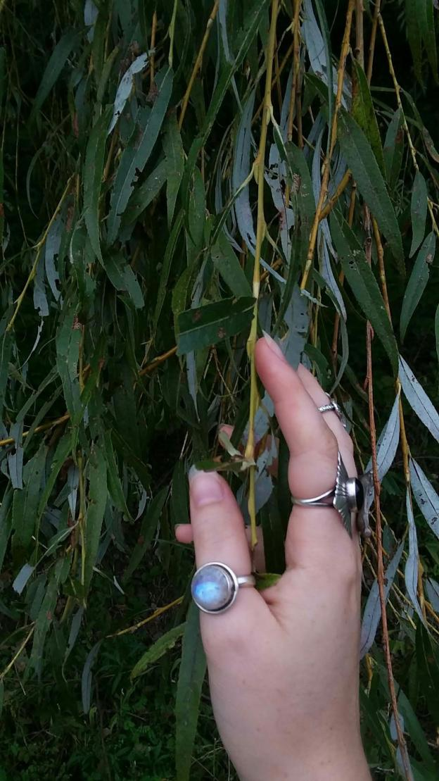 woman's hand with rings on fingers in willow tree branches