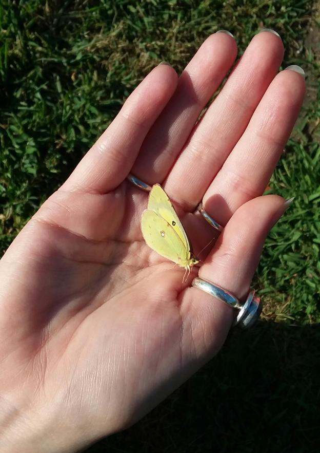 small yellow butterfly in a woman's hand