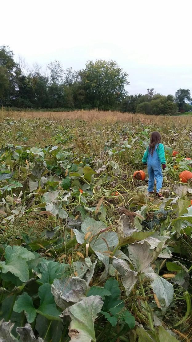 young child wearing overalls in an autumn pumpkin patch in fall
