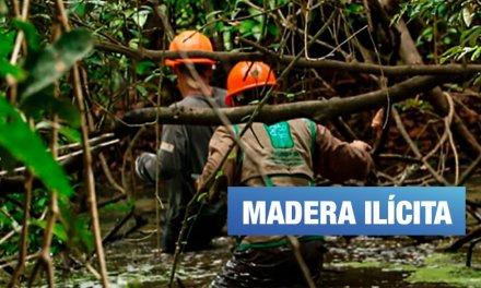 Más de 130 mil árboles se talaron ilegalmente en los últimos 10 años